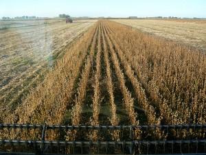 soyharvest