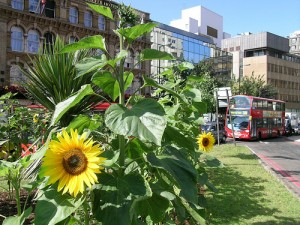 guerilla-gardening