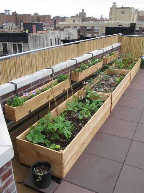 Planting a roof garden civil eats - Huerto en la terraza ...