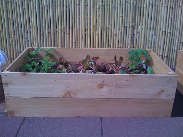 This post is part of a series called Roof Garden Rookies, which explores my ...