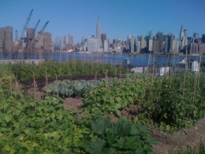 rooftopfarms