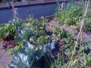 rooftopfarms2