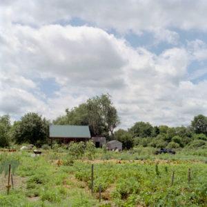 Gaining Ground garden