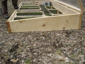 Seed-Starting 101: The Quick-and-Easy Cold Frame | Civil Eats