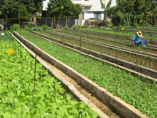 The Exceptional Nature Of Cuban Urban Agriculture Civil Eats