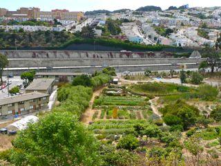 San Francisco Near Adoption Of Urban Agriculture Planning Code Civil Eats