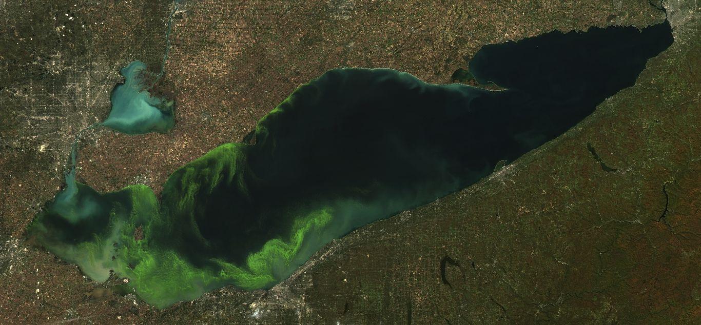 Green Slime Algae Blooms In Nation S Freshwater Causes