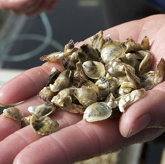 oyster_seeds_jon_rowley_crop