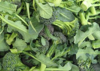 broccoli_shoots