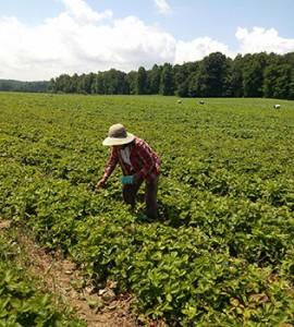farmw-tri1