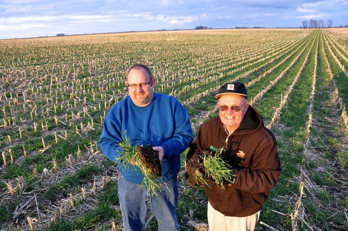 Iowa farmers show off their ryegrass cover crop. (Photo by Lynn Betts for the Natural Resources Conservation Service Soil Health Campaign.)