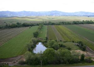 farm_pond_crop