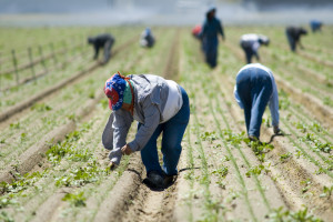 farmworkers Richard Thornton