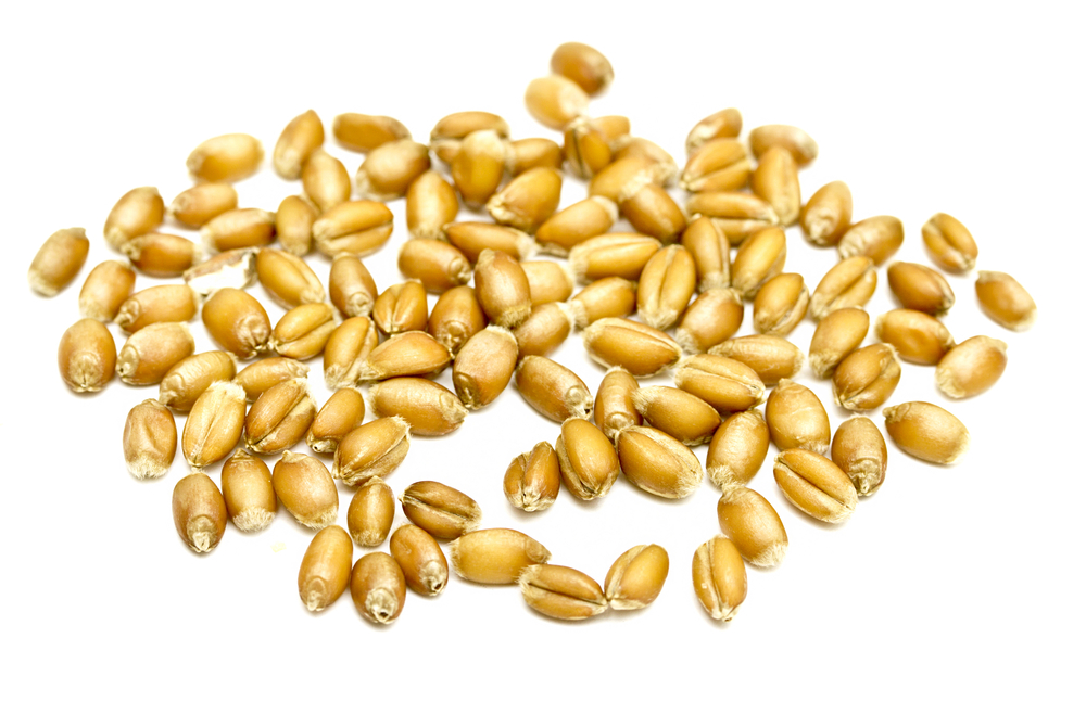 What if Everything You Knew About Grains Was Wrong?
