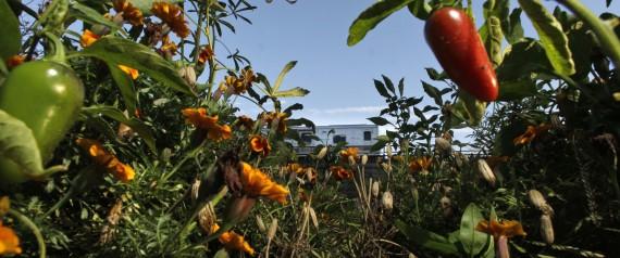 Food and Farm Farm School