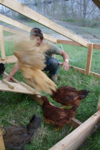 young farmer chickens