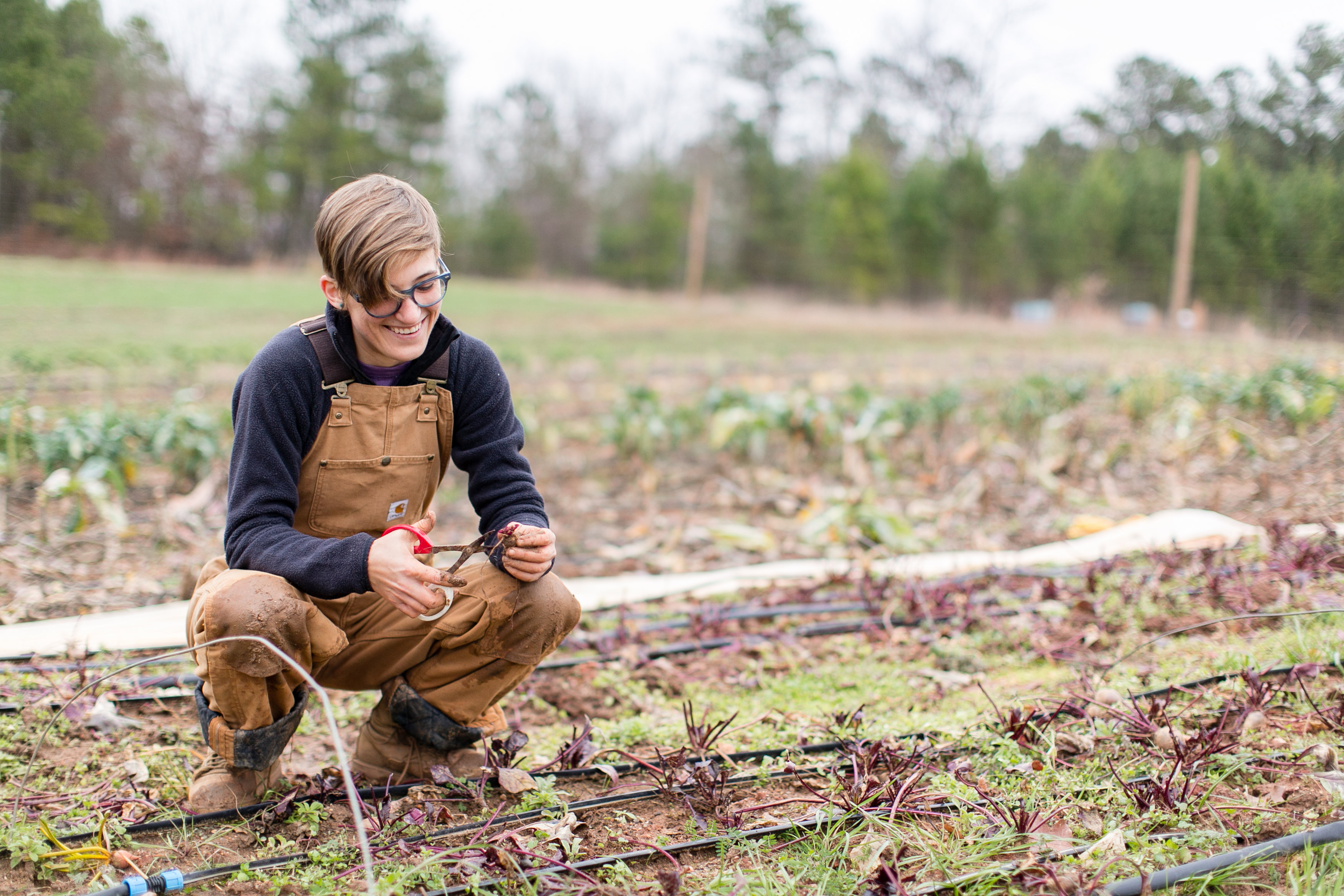 serenbe (farmers grow food)