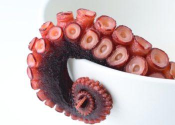 seafood octopus