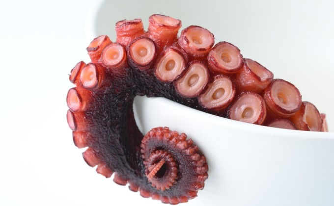 seafood octopus