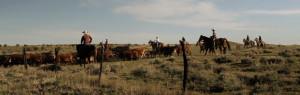 HR_Cattle-Crossing