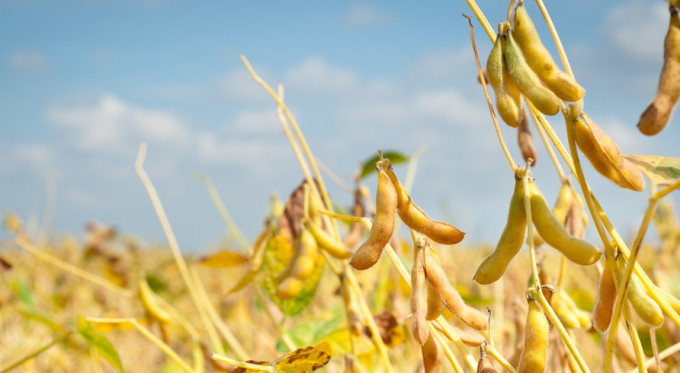 soybeans news