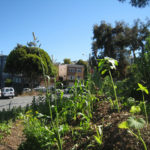 Hayes Valley Farm, San Francisco. Courtesy of edibleoffice, Flickr.