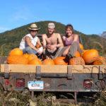 pumpkins_ElatChayyim