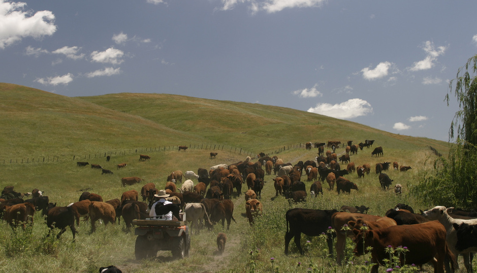 Morris_Ranch