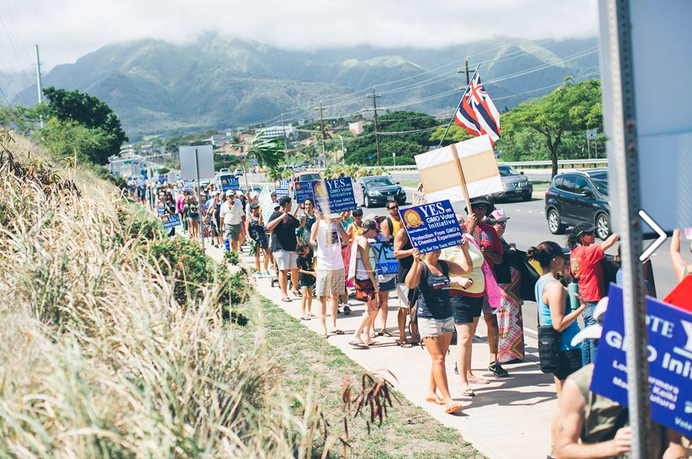 Maui isnt Wowed by GMOs  Civil Eats