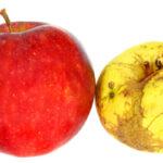 Ugly fruit doesn't taste any worse than pretty fruit. Photo Jelena Aloskina