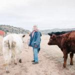 121014_Nuns_cows
