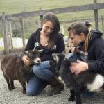 4h-goats__242