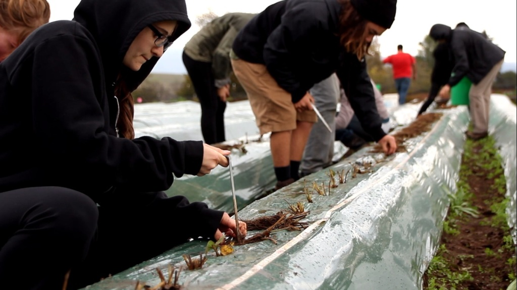 UCSC_CASFS_Strawberry_Planting_by_Interns