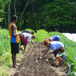 Participants in Project Growth help plant turnip seed. Photo by Jonah Vitale-Wolff.