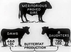 From-USDA-film1