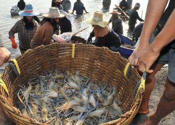 Unidentified workers on a  shrimp farm in Samutprakran, Thailand. (think4photop / Shutterstock.com)