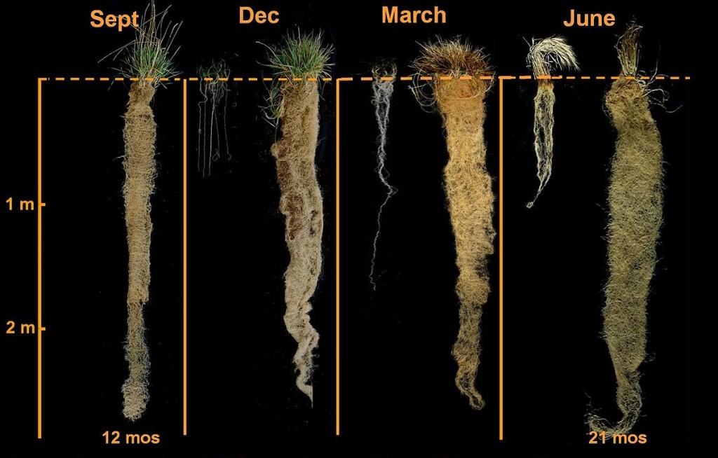"4 Seasons Roots"" by DeHaan"