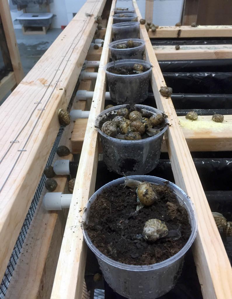 Snail warehouse