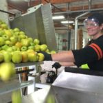 Apples are processed to make spirits at Clear Creek Distillery in Portland, Oregon. Photo by Rachel Inman.