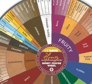 heony_flavor_wheel