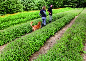 herb farmers