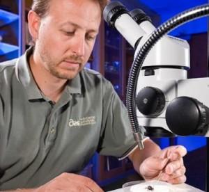 scientist pesticide