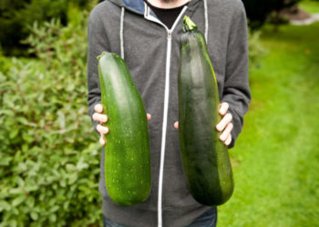 large zucchini pharmaceuticals