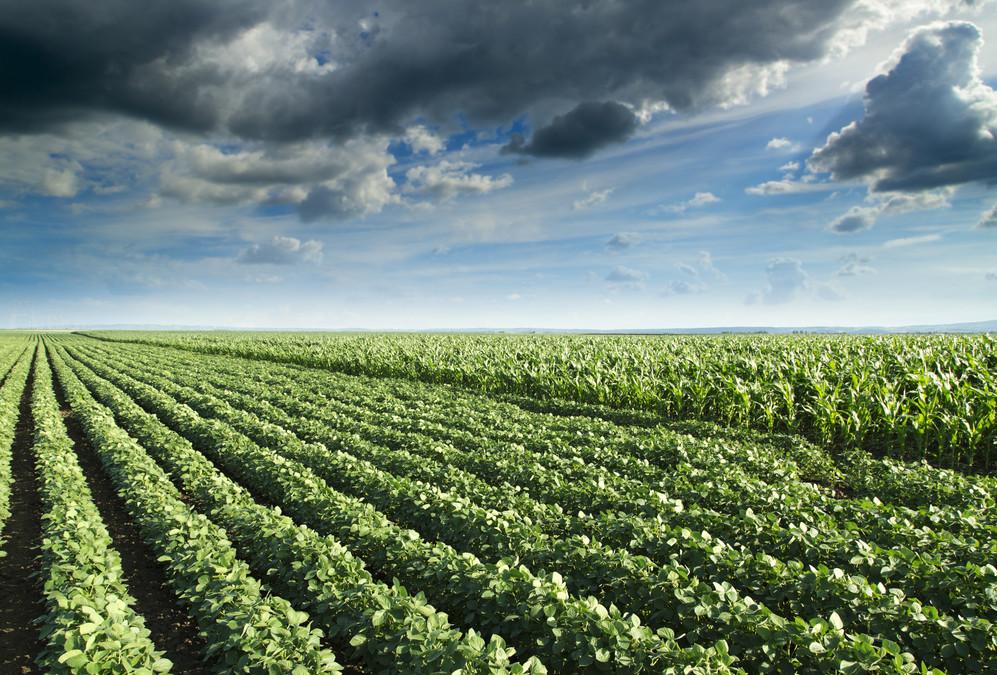 New World Food Crops