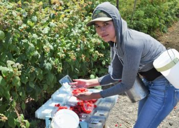 farmworker pesticides
