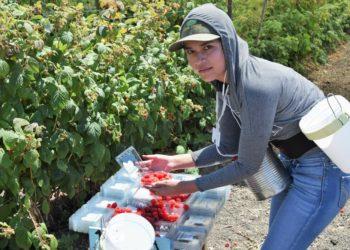 farmworker pesticides