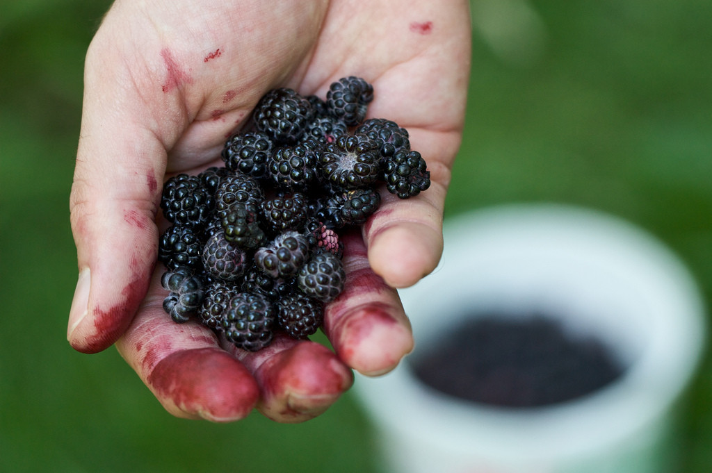 foraged berries