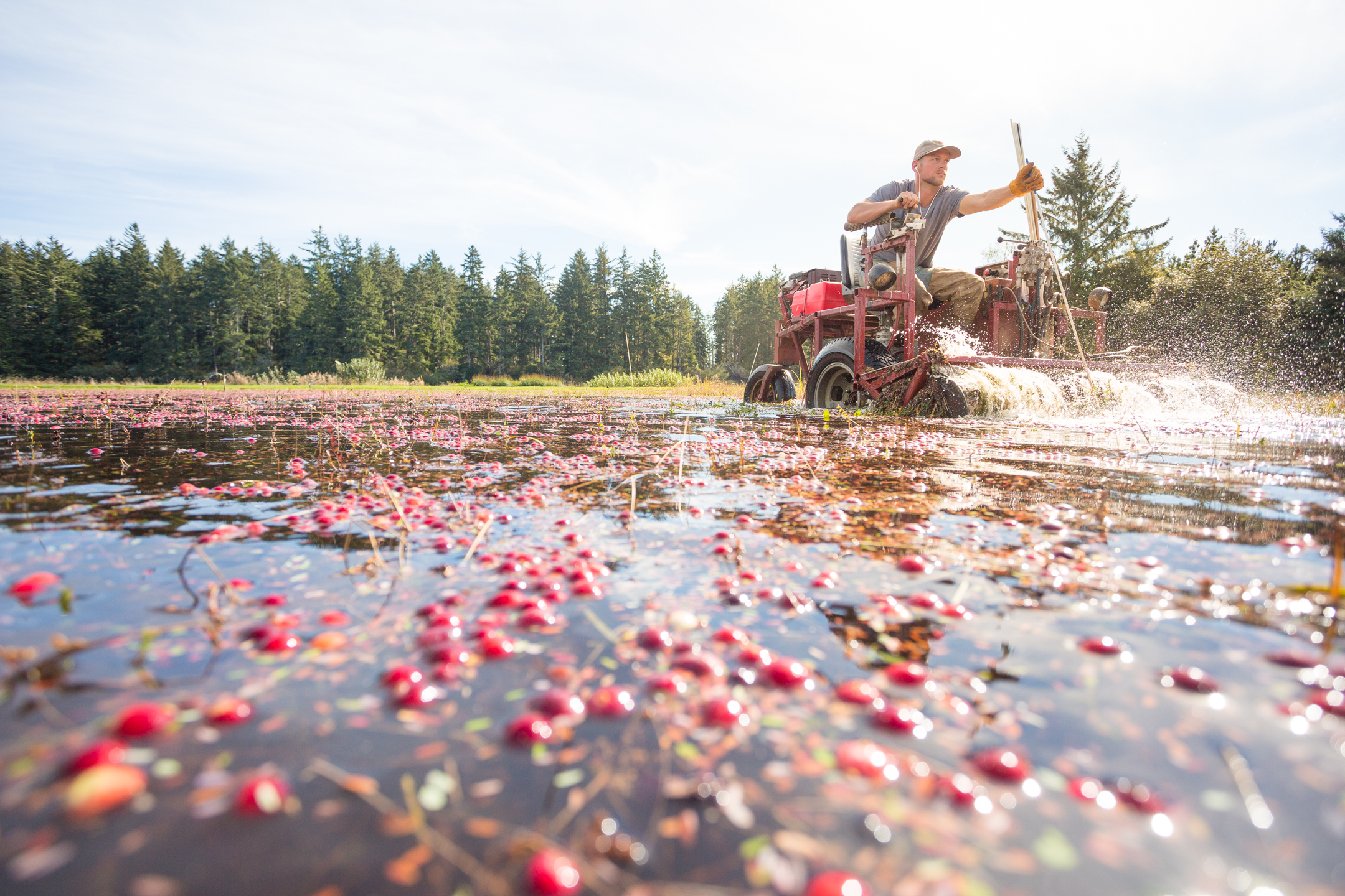 Why Are Organic Cranberries So Hard To Find Civil Eats