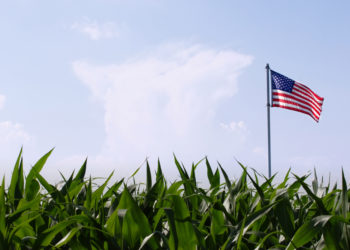 corn field flag food movement