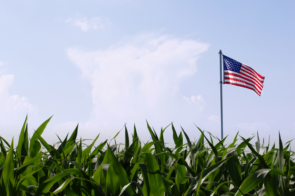 corn field flag food movement